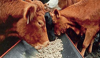 Техника доения коров, а также их правильный раздой